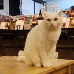 petsyoyo寵遊網-Tiere Pet Hotel/堤柇寵物住宿人文咖啡