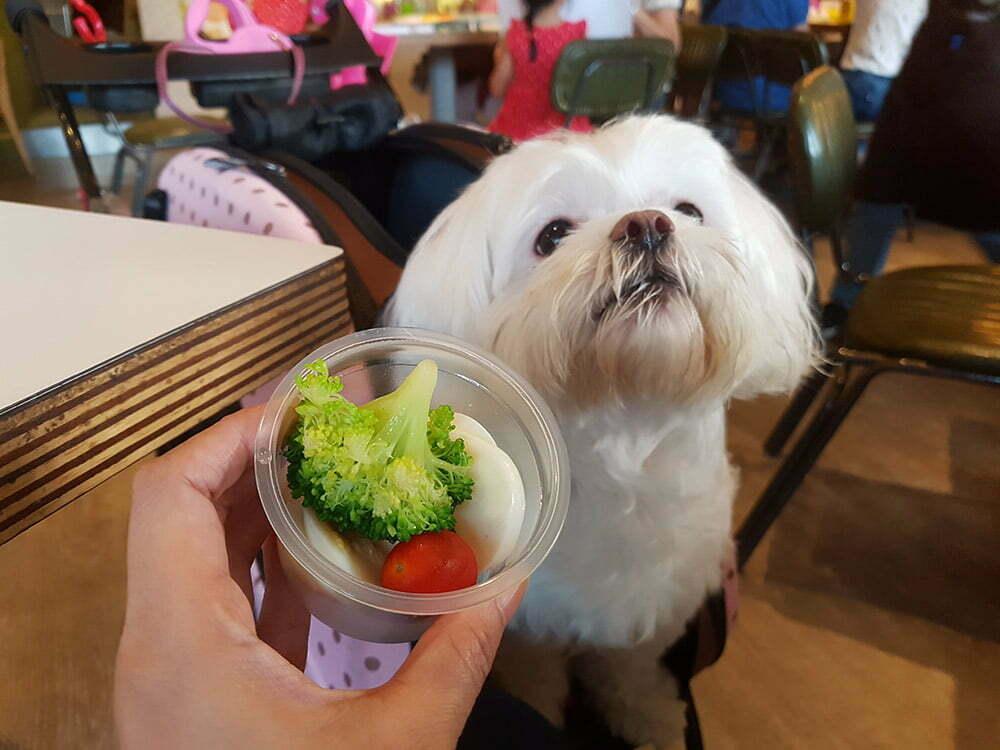 petsyoyo寵遊網-象園咖啡(內湖店)