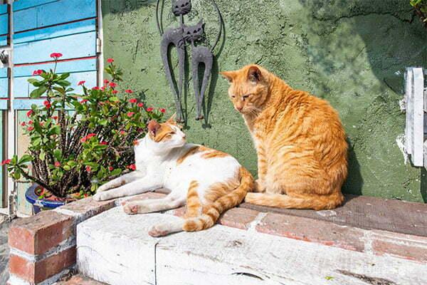 貓天空寵物鄉村民宿Catsky B&B