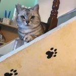 9號貓巷寵物主題餐廳