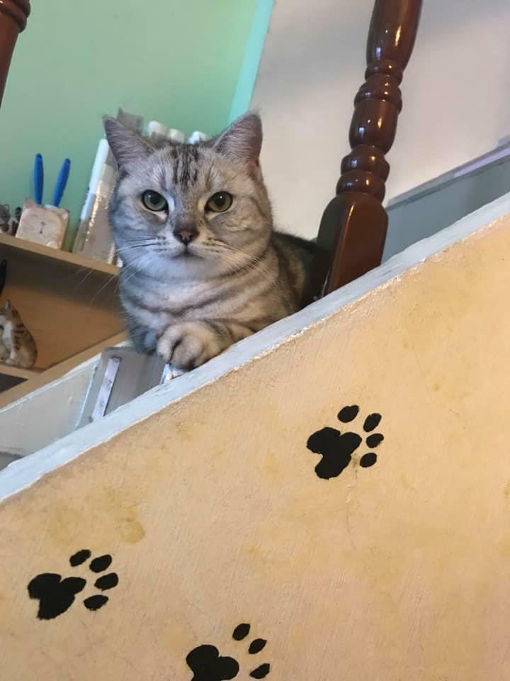 台中寵物餐廳-9號貓巷
