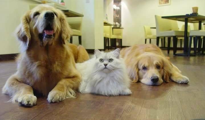 Mona cafe寵物咖啡館