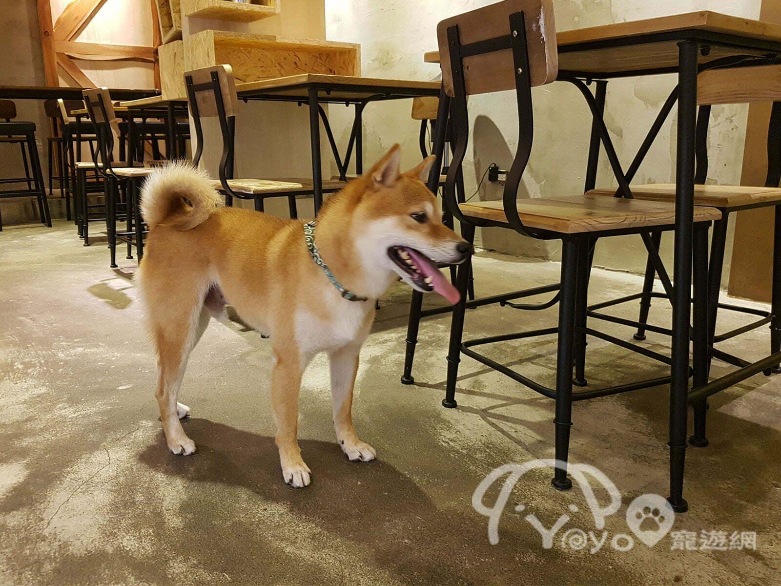 petsyoyo寵遊網-寵物友善旅遊網