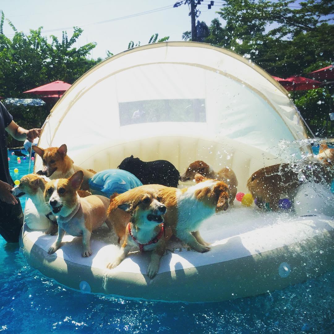 petsyoyo寵遊網-森 • 呼吸 Jorona Park 寵物休閒廣場