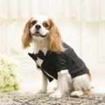 查理士小獵犬-Q比郊遊趣 寵物友善推薦