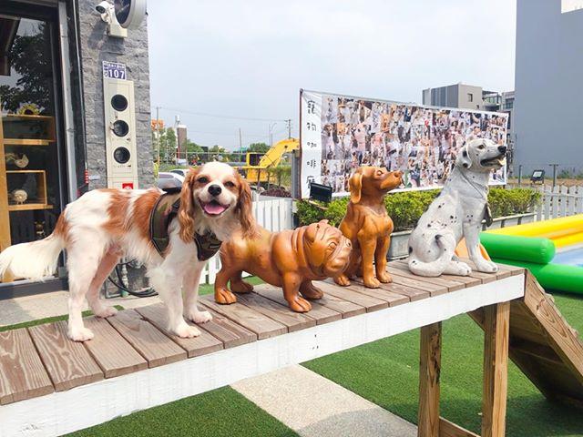 好開心Q比又挖掘到棒棒的寵物餐廳~ 這裡是位於彰化員林的Little Monster 小怪物狗咖啡廳
