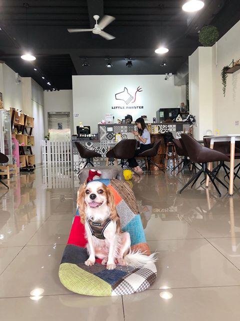 彰化員林寵物友善餐廳-Little Monster 小怪物狗咖啡廳
