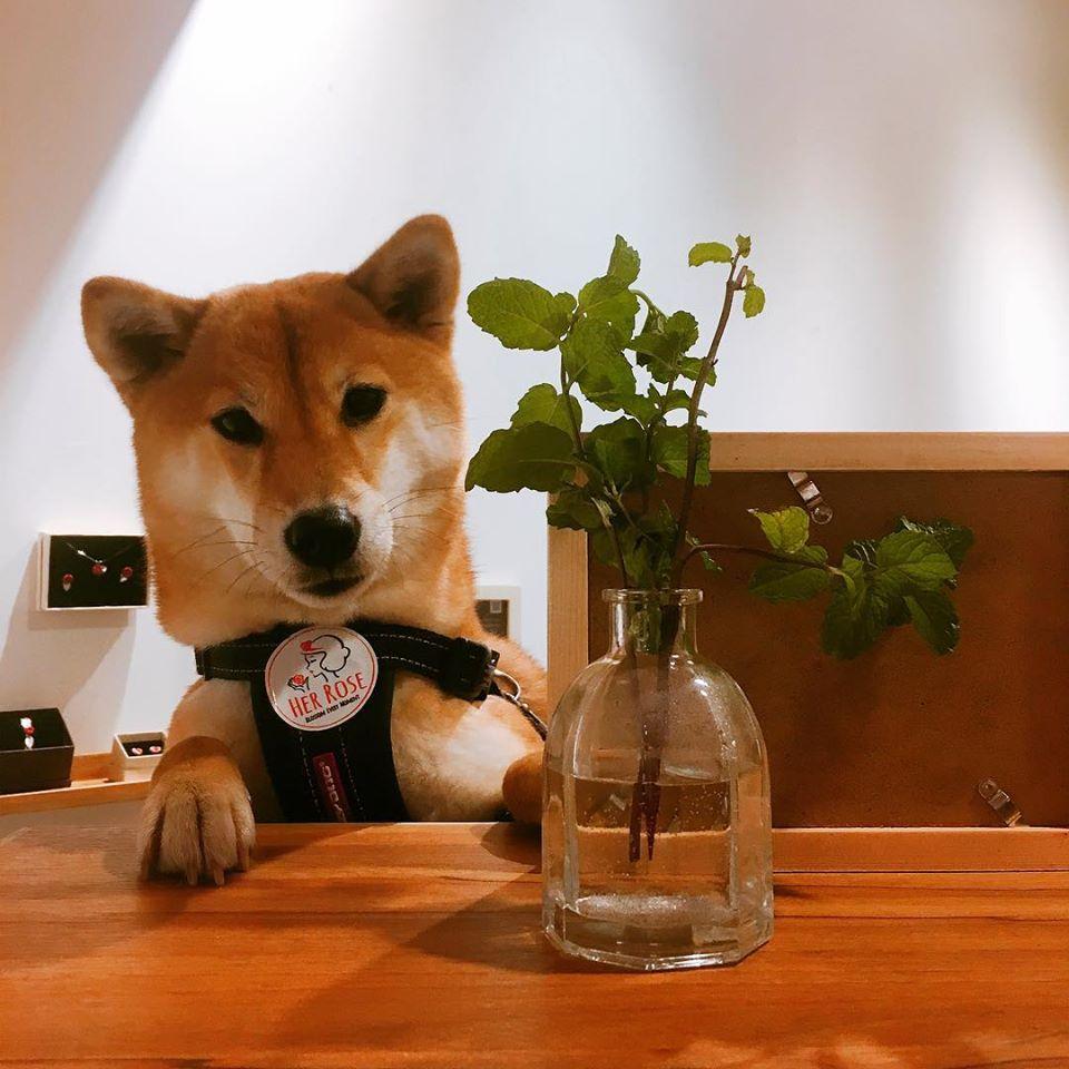 台北中山區寵物友善餐廳-HerRose