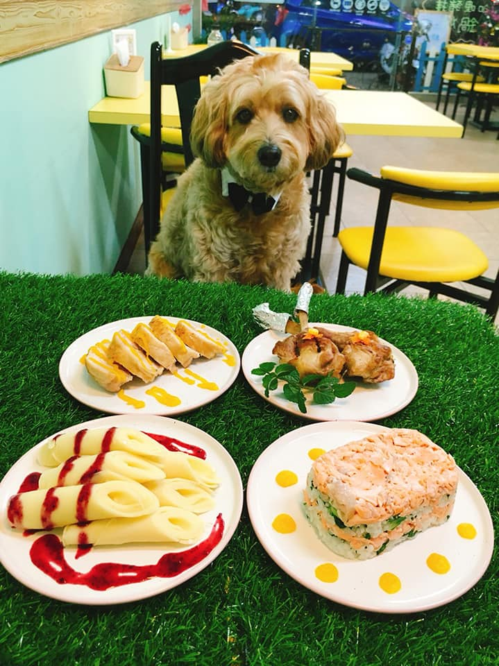 台中寵物友善餐廳-DuDu Go寵物友善餐廳