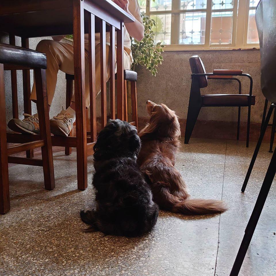 台南寵物友善住宿-House 台南寵物友好