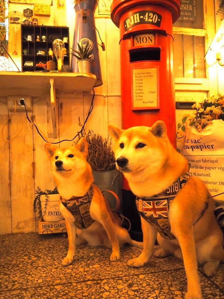 新北板橋寵物友善餐廳-Petit Tuz 小兔子鄉村輕食雜貨鋪_比比的祕密花園提供
