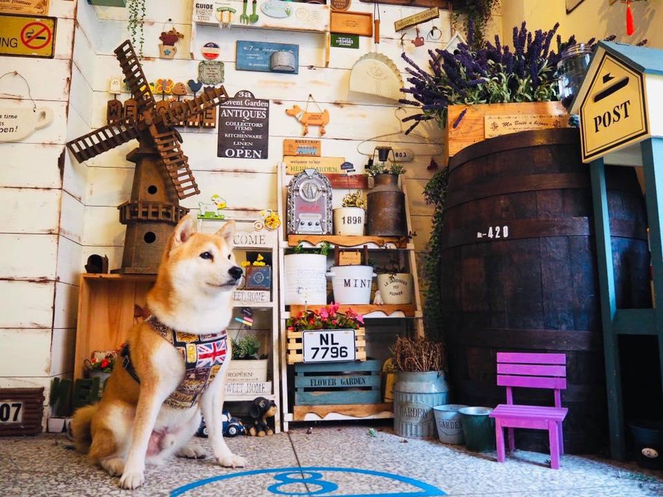 新北板橋寵物友善餐廳-Petit Tuz 小兔子鄉村輕食雜貨鋪