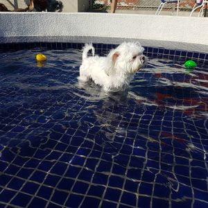 狗老大寵物渡假會館