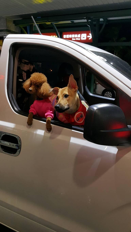 毛寶愛旅行