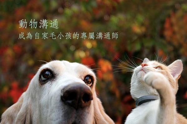 動物溝通初階~成為自家毛小孩的專屬溝通師