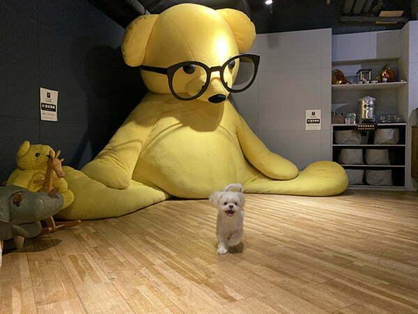 台北信義寵物友善餐廳-Out of office 不在辦公室