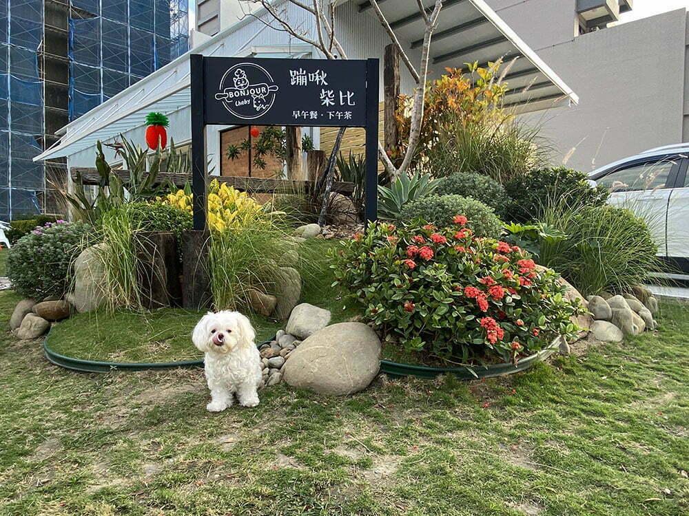 新竹竹北寵物友善餐廳-Bonjour Cheby 蹦啾柴比友善早午餐