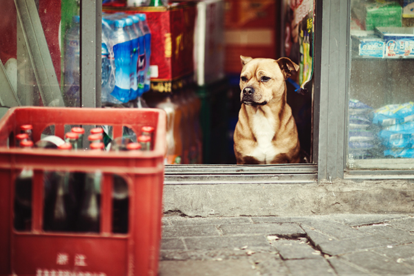 寵物新聞-毛爸媽注意!許多犬貓共通性疾病比登革熱更可怕-陳蓁