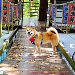 【遊。南投】妖怪創界-糖狗村〜秒飛日本來這裡!妖怪村另一新作,奇幻的網美拍照景點,讓毛孩一秒變網美!