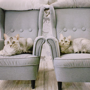 三重‧菜寮捷運站|O CAT CAFÉ'|貓咪咖啡廳|鄰近大都會公園,適合遛玩室外行程後放鬆自在的地方,歡迎想嚕貓、吸貓、聽呼嚕呼嚕的你一起來玩!