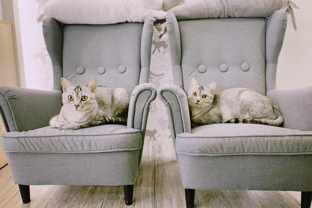 新北三重寵物餐廳-O CAT CAFE_Paw-Dreamer提供